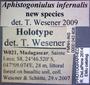 43808 Aphistogoniulus infernalis HT  labels