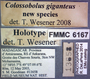 Colossobolus giganteus HT  labels
