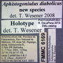 6169 Aphistogoniulus diabolicus HT  labels