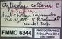 Aztecolus collaris ST  labels