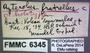 6345 Aztecolus fratrellus HT labels
