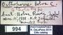 994 Orthoporus bobos HT  labels