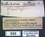 995 Orthoporus euthus HT  labels