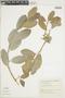 Ficus pallida image