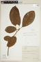 Ficus trigona L. f., BRAZIL, F