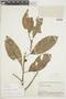 Ficus trigona L. f., BOLIVIA, F