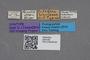 2819190 Calodera bisulcata ST labels IN