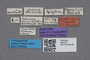 2819191 Calodera glabra ST labels IN
