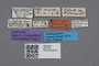 2819192 Calodera grandipennis ST labels IN
