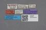 2819193 Calodera minima ST labels IN