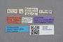 2819200 Calodera rhopalicornis ST labels IN