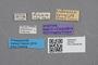 2819201 Calodera sparsior ST labels IN