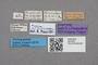 2819202 Ocyusa ajmonis ST labels IN