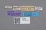 2819204 Ocalea tuberculiventris ST labels IN