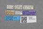 2819205 Zyras rambouseki ST labels IN