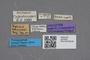2819208 Zyras minimus HT labels IN