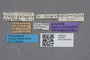 2819209 Myllaena africana ST labels IN