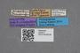 2819211 Calodera brasiliana HT labels IN