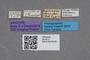 2819212 Calodera bruchi ST labels IN