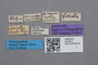 2819214 Oxypoda pilosicollis ST labels IN