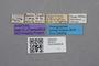 2819215 Calodera dilatata ST labels IN