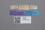 2819219 Oxypoda antipodum Bernhauer ST labels IN