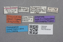 2819225 Oxypoda zealandica ST labels IN