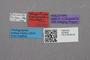 2819228 Termitusa lativentris HT labels IN