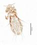29906 Fahrenholzia fairchildi PT v IN