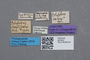 2819232 Polylobus netolitzskyi ST labels IN