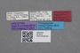2819234 Polylobus peckorum HT labels IN