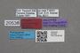 2819236 Alzada pulcherrima HT labels IN