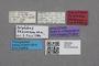 2819237 Polylobus tescorum HT labels IN