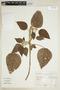 Croton pilulifer Rusby, ARGENTINA, F
