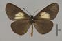 124146 Actinote alcione ssp d IN