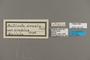 124162 Altinote eresia eresina labels IN