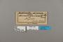 124172 Altinote dicaeus ozinta labels IN