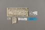 124178 Acraea indentata labels IN