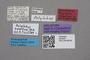 2819253 Polylobus newtoni HT labels IN