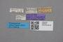 2819254 Oxypoda pulchricornis HT labels IN