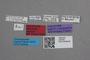 2819259 Acrolocha newtoni HT labels IN