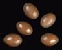 White-bellied Nothura egg