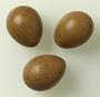 Blue-breasted Quail egg
