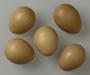 Swinhoe's Pheasant egg