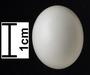 Common Ground-Dove egg