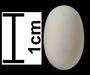 Steely-vented Hummingbird egg