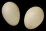 Red-billed Leiothrix egg