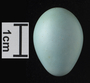 Hermit Thrush egg