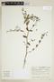 Euphorbia hypericifolia L., COLOMBIA, F