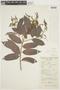 Mabea paniculata image